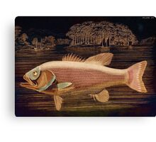 Pink Salmon Canvas Print