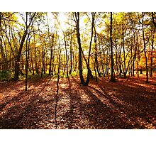 Autumn in Wimbledon Photographic Print