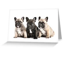 Puppy Pals  Greeting Card