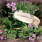 Feather Lite by Susan Bergstrom