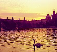 Swan, The Charles Bridge (Karlův Most) Prague, Kodachrome 64 by Mikhail31