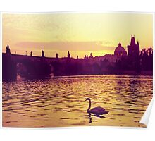 Swan, The Charles Bridge (Karlův Most) Prague, Kodachrome 64 Poster
