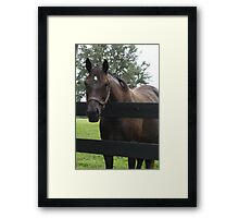 Hello There! Framed Print