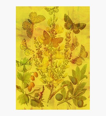 Butterfly Cascade Photographic Print