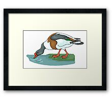 Duck Drinking Water Framed Print