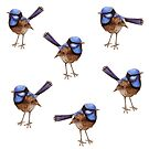 Blue Wrens, Russet and White by ThistleandFox