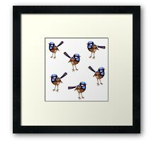 Blue Wrens, Russet and White Framed Print