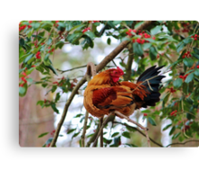 Rooster In A Tree Canvas Print