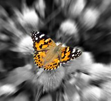 A Painted Lady  by hannahsview
