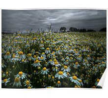 The Beauty of Wild ~ Oregon Wildflowers ~ Poster