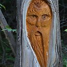 Faces in the woods #1 by Heather Crough