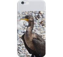 Double Crested Cormorant iPhone Case/Skin