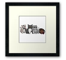 A Gang of Kittens Framed Print