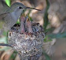 Hummingbird Family 2  by Judy Grant