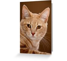 The ruler of our home Greeting Card