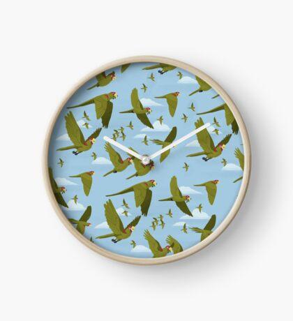 Parakeet Migration Clock