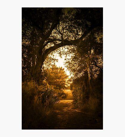 Golden Path Photographic Print