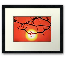 Red Thorn - Simply Majestic Nature  Framed Print