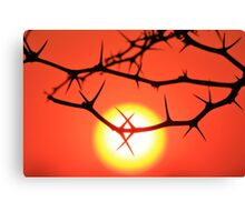 Red Thorn - Simply Majestic Nature  Canvas Print