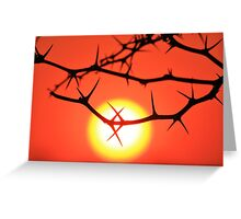 Red Thorn - Simply Majestic Nature  Greeting Card