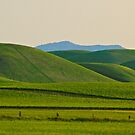 Rolling Green Pano by Barbara  Brown
