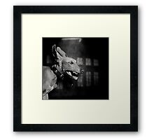 Dogs with game face on .27 Framed Print