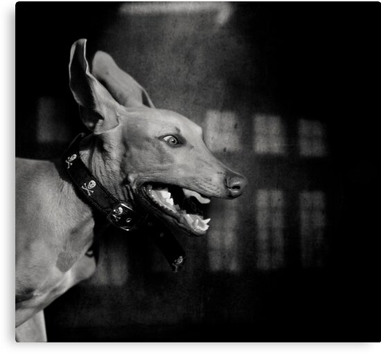 Dogs with game face on .27 by Alex Preiss