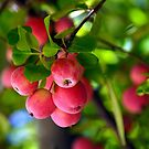 Crabby Apples by © Loree McComb