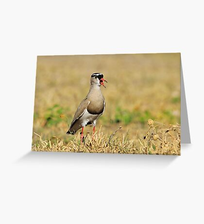 Plover Talk - Funny Nature and Entertaining Wildlife Greeting Card