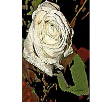 white roses of romance  Photographic Print
