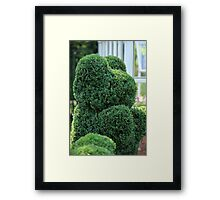 green bear topiary   Framed Print