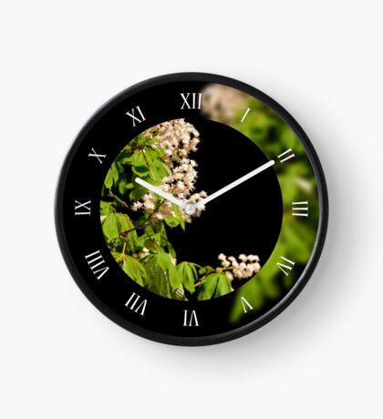 Blooming Aesculus trees  Clock
