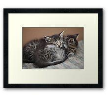 sleeping little kittens Framed Print