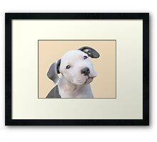 Did You Say I'm Cute? Framed Print