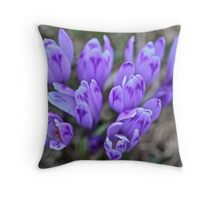 Crocus sativus .  Krowiarki pass . Gorce Mountains.Poland. 1348 views. Thank you so much !!!! by Brown Sugar ! Throw Pillow