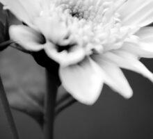 Black White Flower Sticker