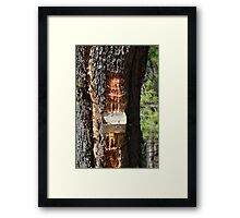 Alonissos pine resin collecting Framed Print