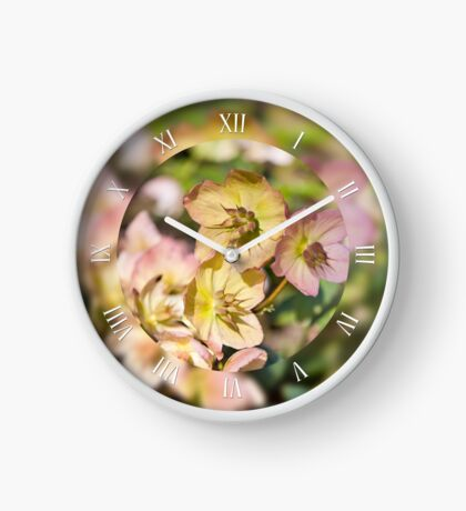 Helleborre pink flowering macro Clock