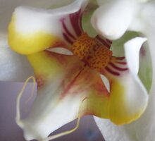 ORCHID MACRO by Colleen2012