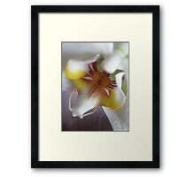 ORCHID MACRO Framed Print