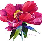 Magenta Peony Watercolor by Pat Yager
