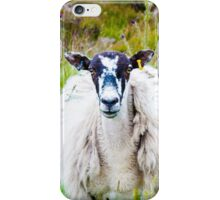 View of English grazing sheep in countryside iPhone Case/Skin
