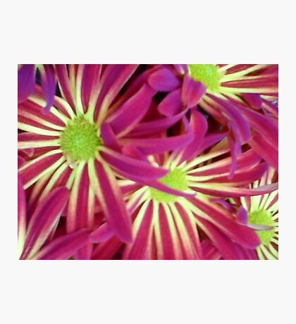 Red & Yellow flowers  Photographic Print