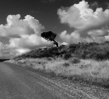 The Tree between the clouds by Angelika  Vogel