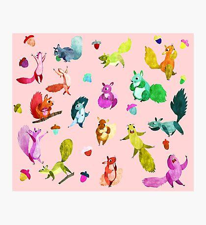 Squirrels  Photographic Print