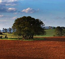 Red Soil Dorrigo by Clare Colins