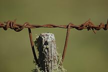 the old fence post by Clare Colins