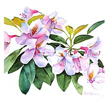 Spring Rhody Watercolor Photographic Print
