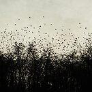flying birds by beverlylefevre