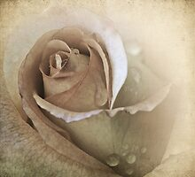 Will The Roses Bloom Again? .... by Sharon House